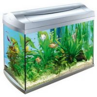 Aquariums cheap fish tanks for sale for Cheap fish tanks for sale